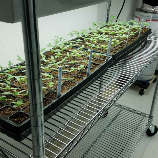 SEED CULTIVATION FACILITY